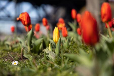 Frühlingsfarben - Rot & Gelb