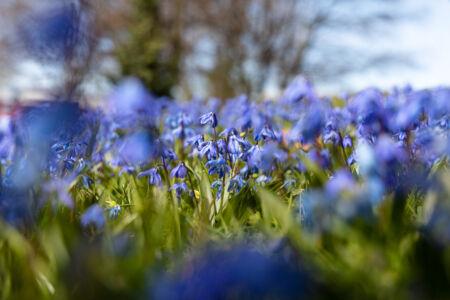 Frühlingsfarben - Blau