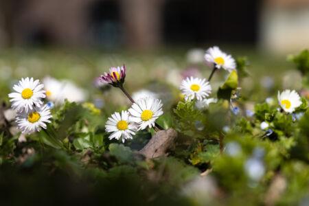 Frühlingsfarben - Grün & Weiss