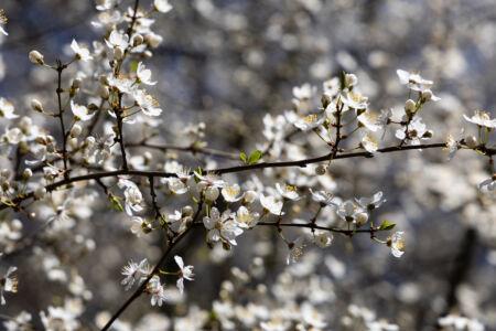 Frühlingsfarben - Weiss